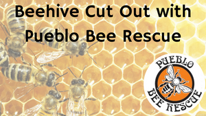 Bee Cut Out with Pueblo Bee Rescue