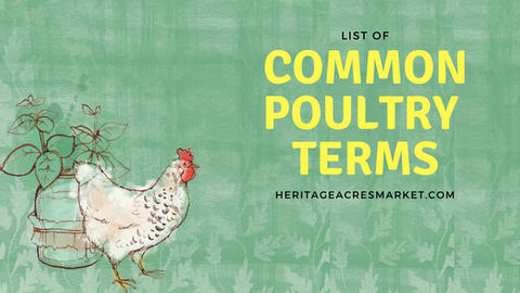 Common Poultry Terms