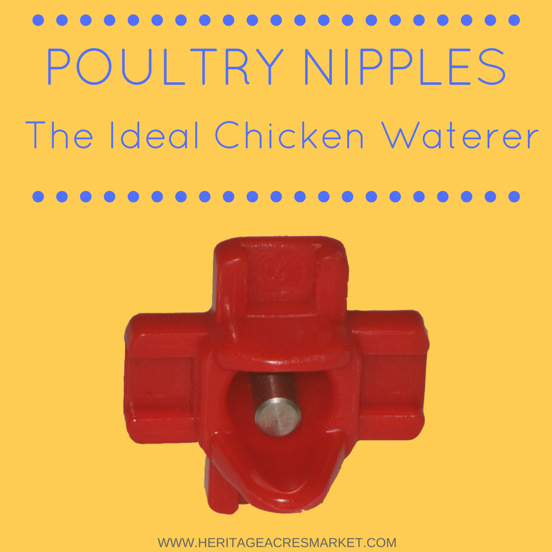 Poultry Nipples: The Ideal Chicken Waterer
