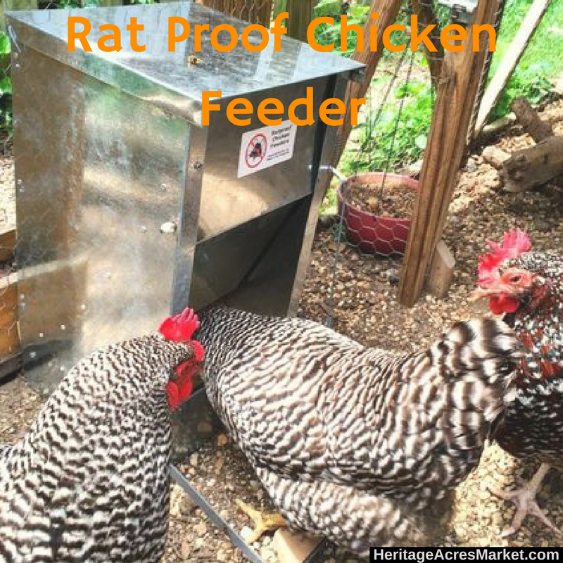 Stop Wasting Money on Chicken Feed!