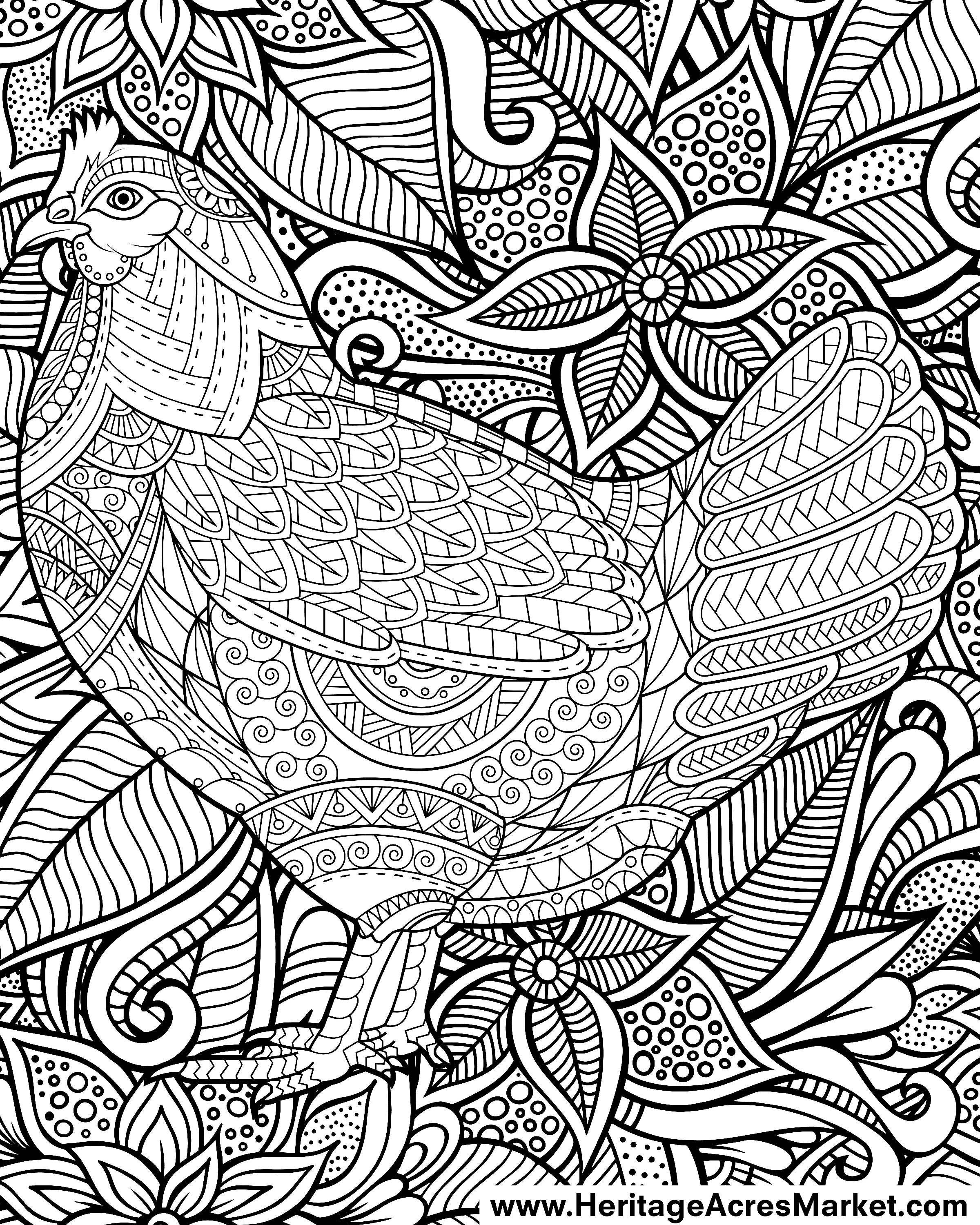 week 3 free coloring page funky chicken u2013 heritage acres market llc