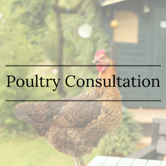 Poultry Consultation