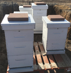 Our Pueblo West apiary
