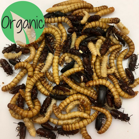 Mealworm Starter Kit - Heritage Acres Market LLC