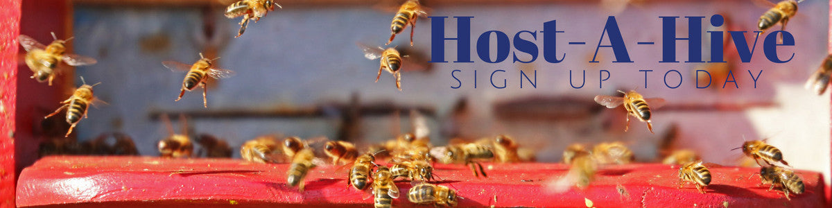 Host A Honey Bee Hive In Your Own Backyard
