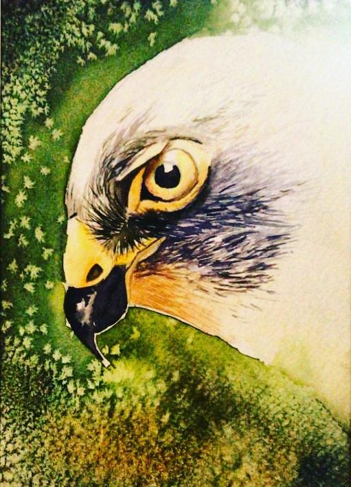 Original Eagle Watercolor Painting Maryam Mohi