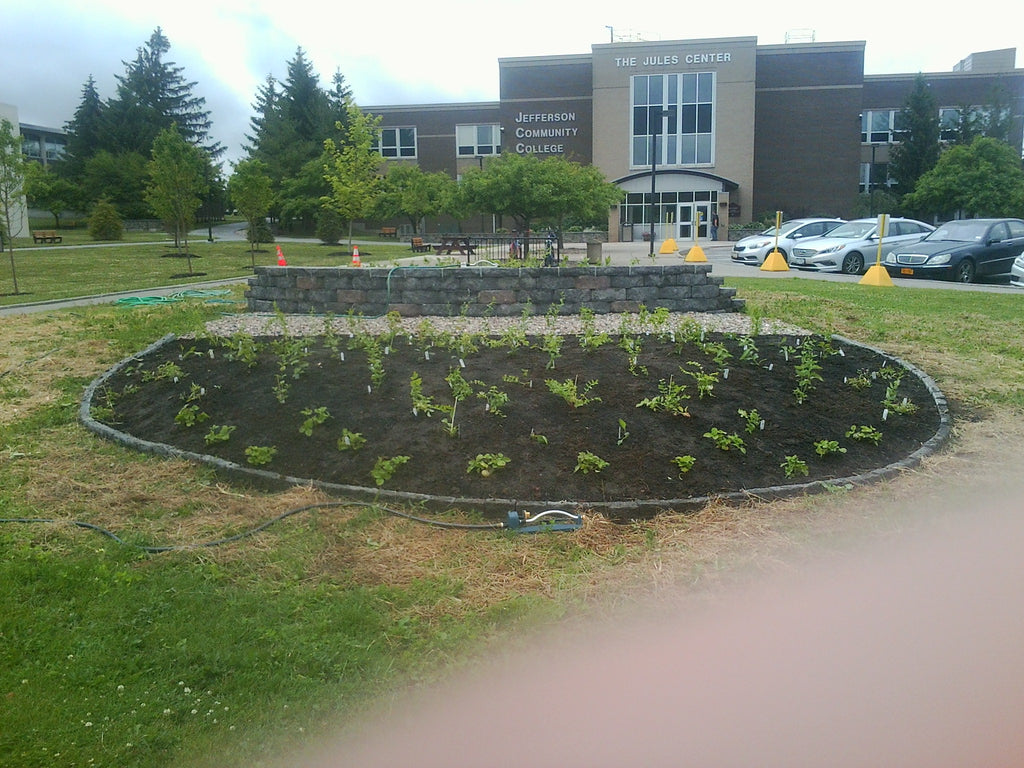 SUNY Jefferson Community College in Watertown NY creates a big pollinator display garden!