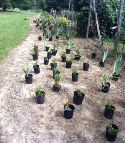 Laying Out Plants for a Pollinator Garden