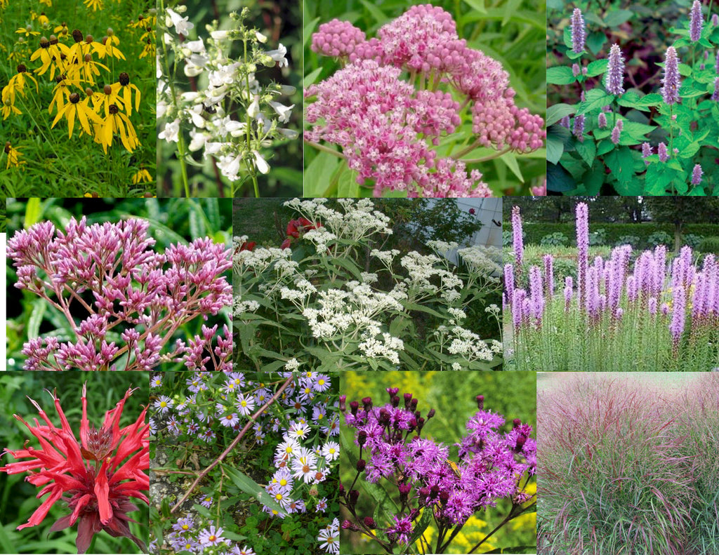 2.  Pollinator/Rain Garden Collection for Sun to Part Sun, Moist to Wet