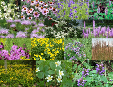 6. Pollinator Garden Collection w/Ground Cover, for Sun to Part Sun, Dry to Moist