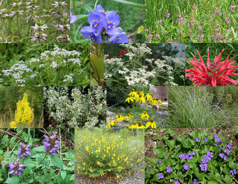 8. Naturalizing Pollinator Garden Collection w/Ground Cover, for Sun to Part Sun, Dry to Moist