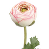 Pink Ranunculus Stem LOCAL ONLY