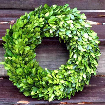 Preserved Boxwood Wreath, 14 Inch
