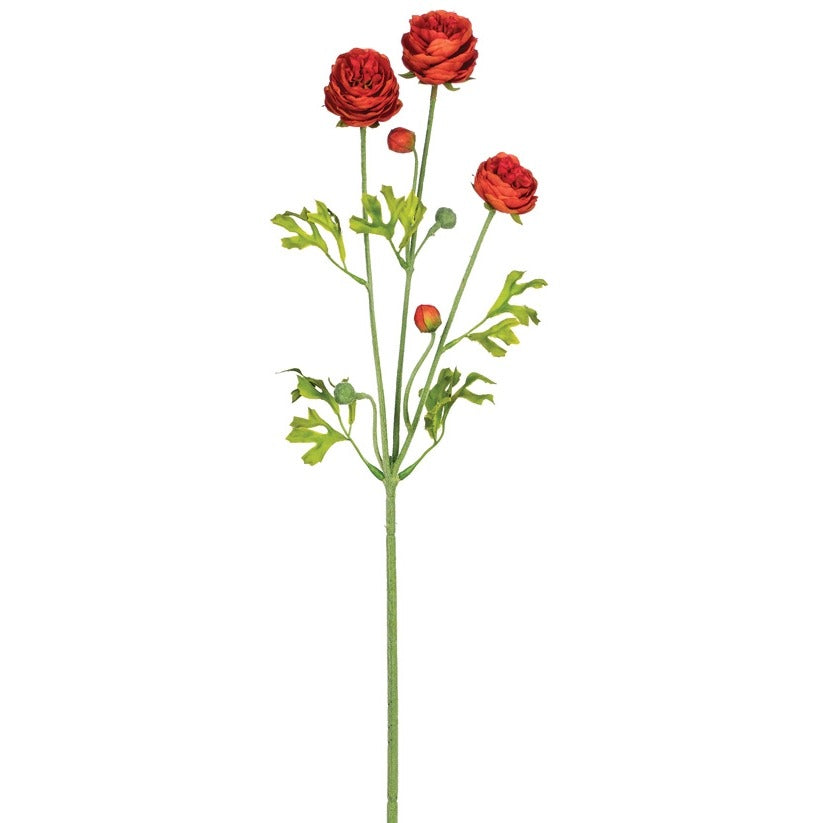 Orange/Red Ranunculus Stem LOCAL ONLY