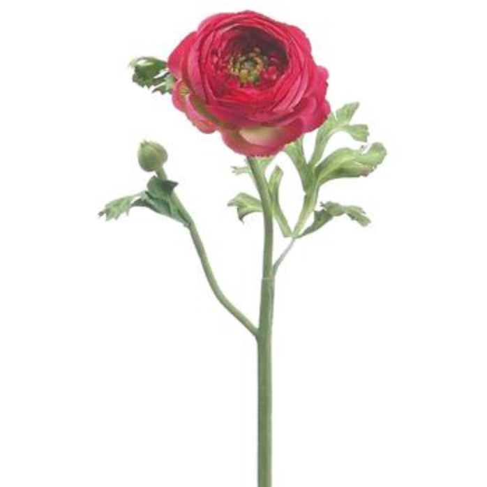 Ranunculus Stem LOCAL ONLY