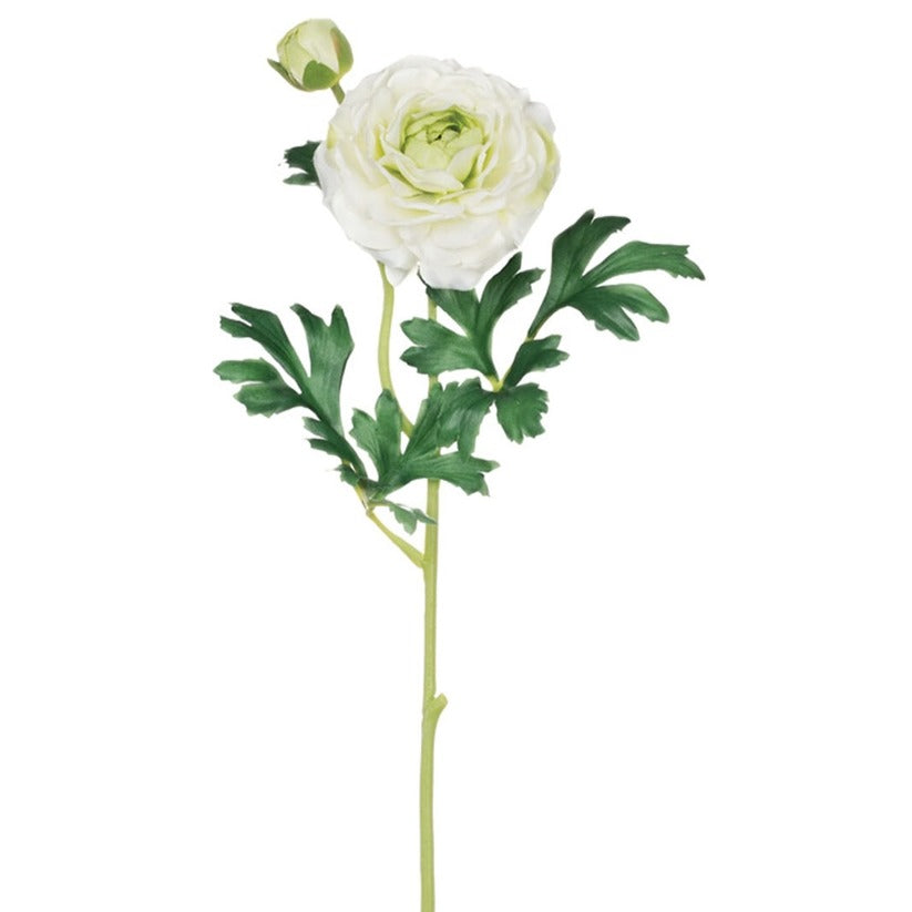 White Ranunculus Stem LOCAL ONLY