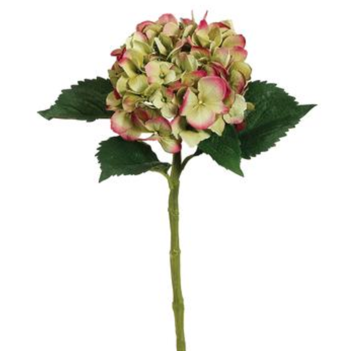 Green/Pink Hydrangea Stem LOCAL ONLY