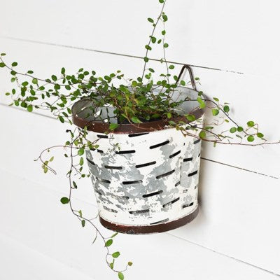 Olive Bucket Wall Vase LOCAL ONLY
