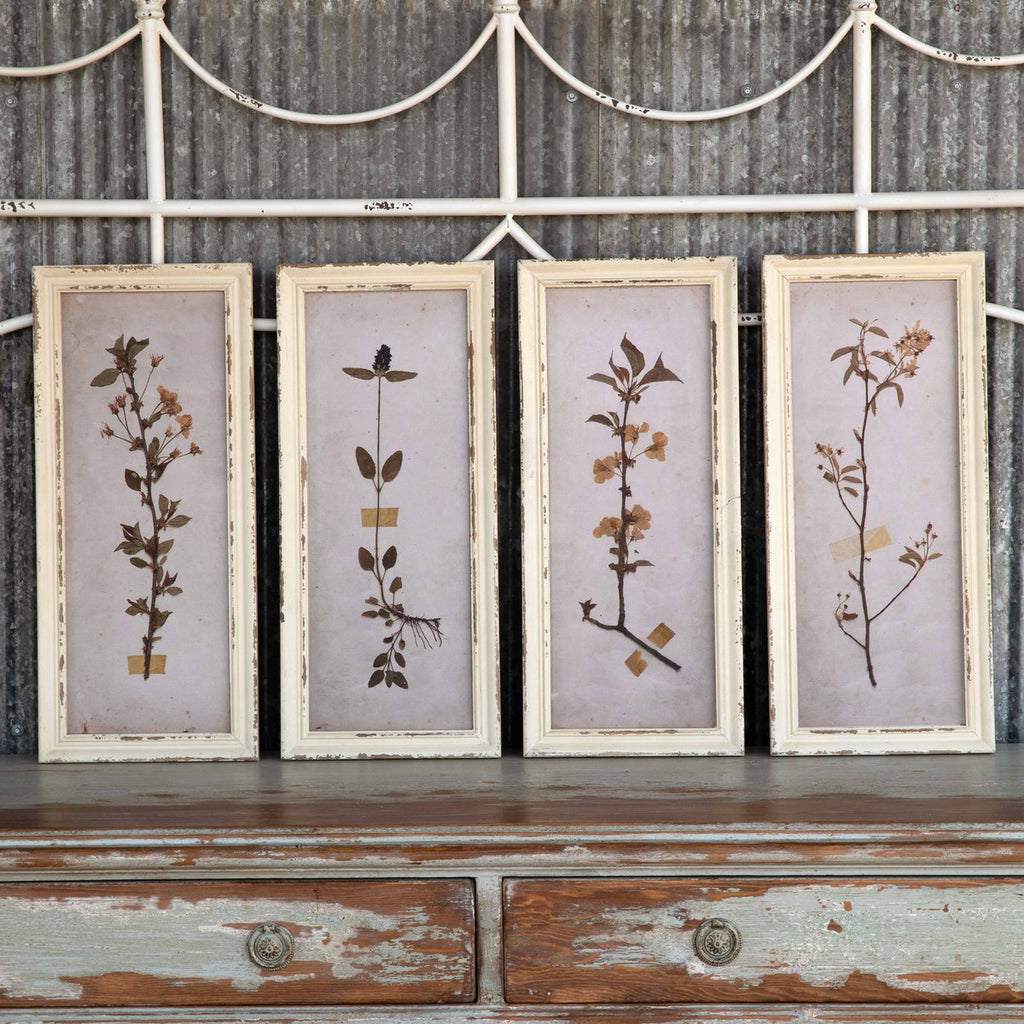 Pressed Botanical Framed Prints