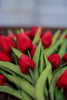 Red Real Touch Tulips, Set of 12 LOCAL ONLY