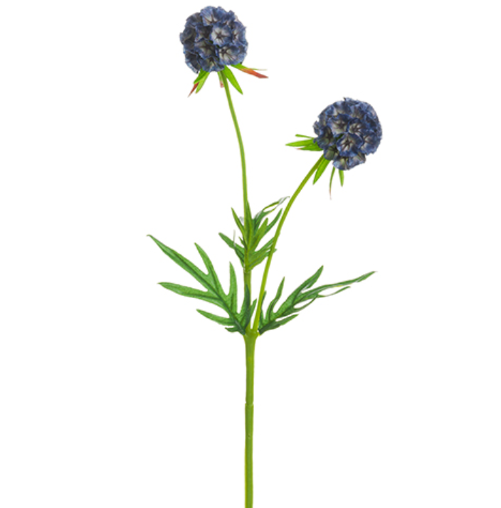Slate Blue Scabiosa Stem LOCAL ONLY
