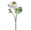 White/Green Ranunculus Stem LOCAL ONLY