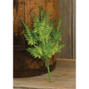 Wood Fern Bush