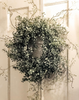 Boxwood Tendril Wreath LOCAL ONLY