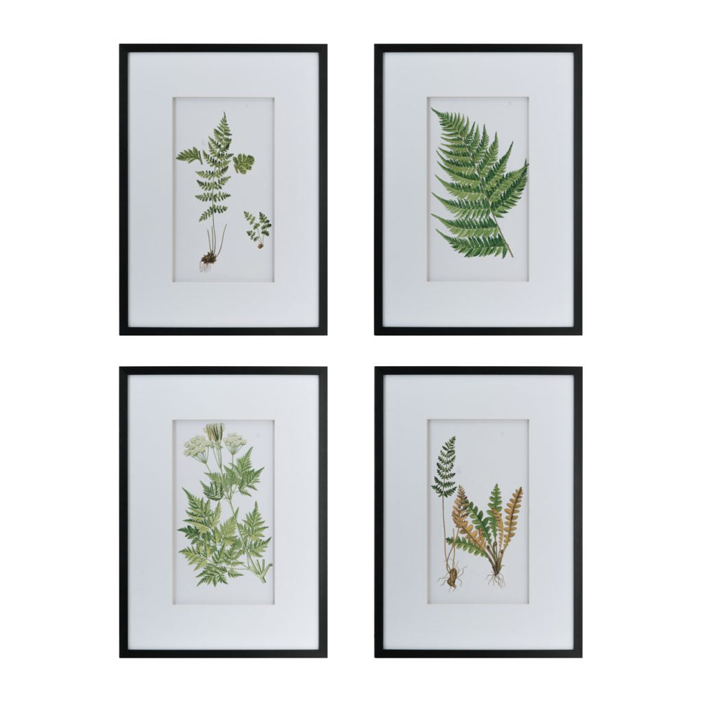 Framed Fern Art, Set of 4