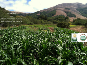 Image of Living Seed Farm on Black Mountain Ranch Point Reyes Station.