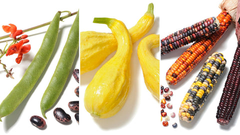 Living Seed Montage - Corn, beans & Squash