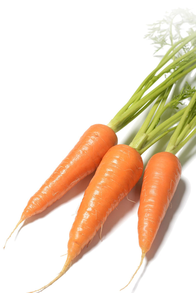 Organic Red Cored Chantenay Carrot - Daucus carota