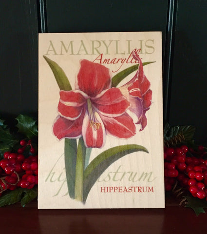 Amaryllis - art board