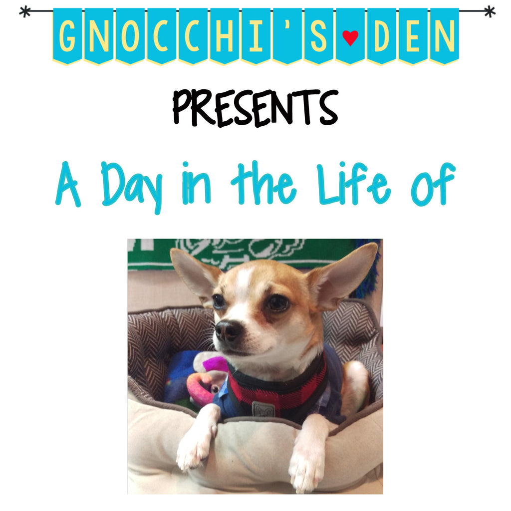 A Day In The Life Of...... Gnocchi