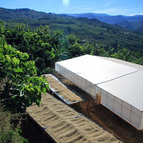 Costa Rica La Casona San Francisco <br><em>Micro Lot, Fair Trade</em>