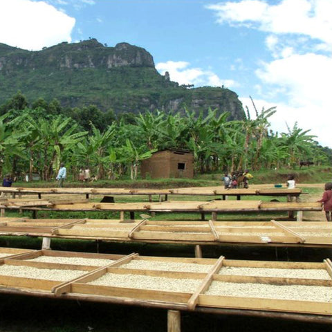 Uganda Sipi Falls <br><em>Unroasted, Fair Trade, Organic</em>