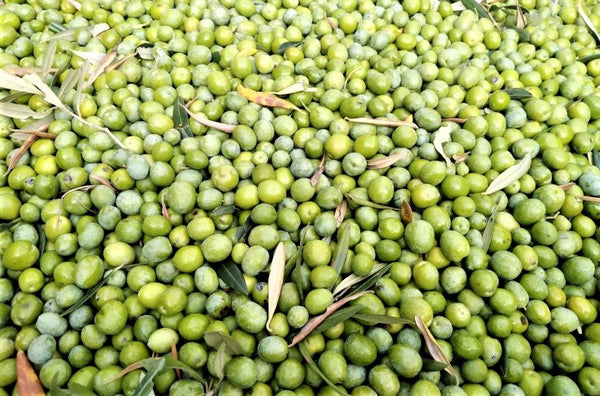 Giant pile of ripe green olives, including dark green leaves, covers entire photo.