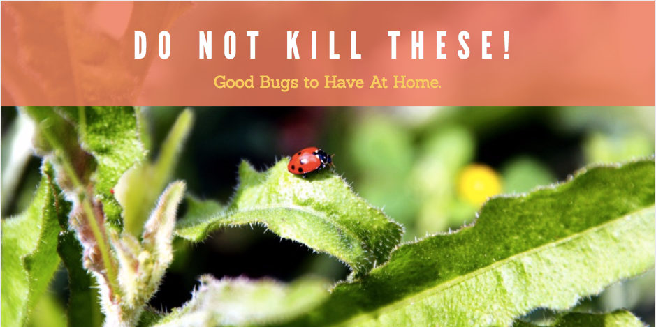 Do Not Kill These! Good Bugs To Have At Home.