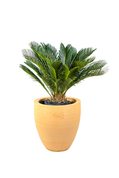Cycas & Pot Ravel