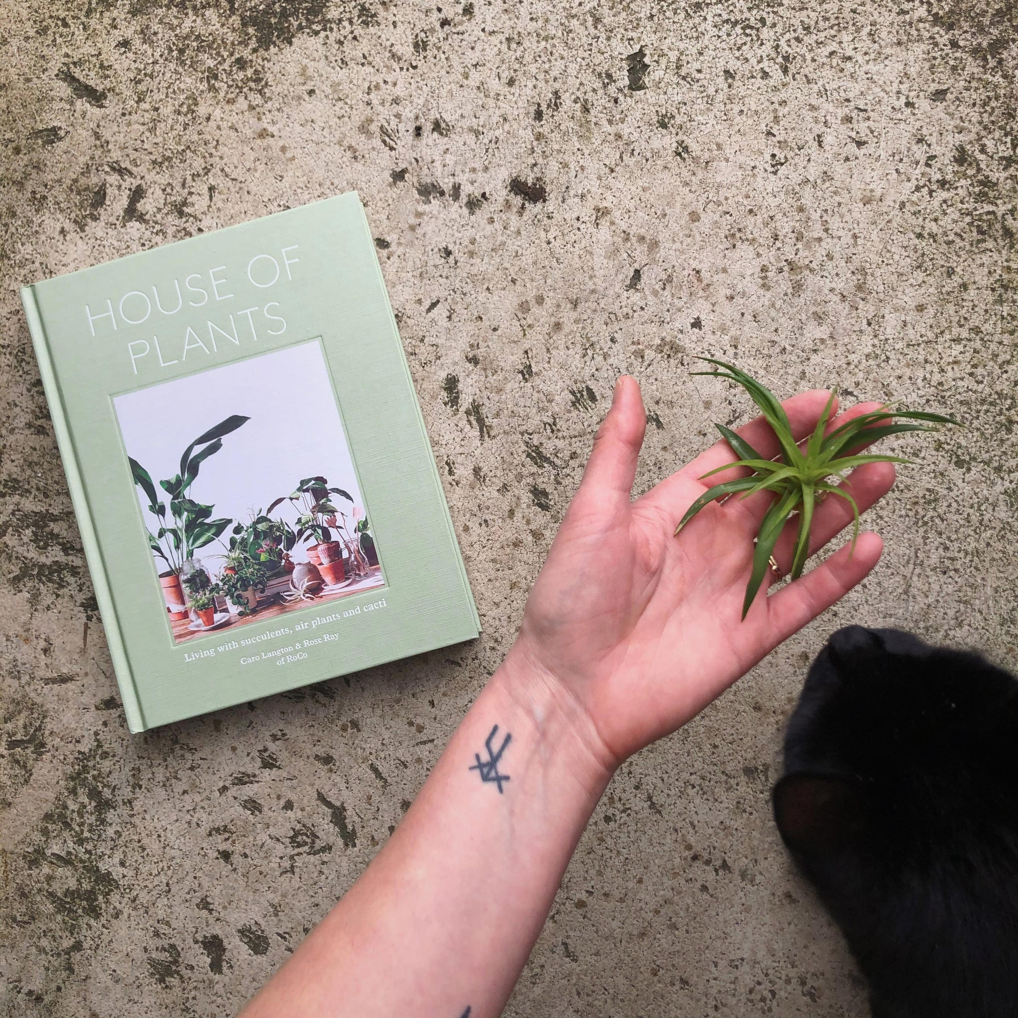 Image of a white skinned hand, holding a small plant. To the left, a book called House of Plants is visible, to the right, a black cat is sniffing the hand.