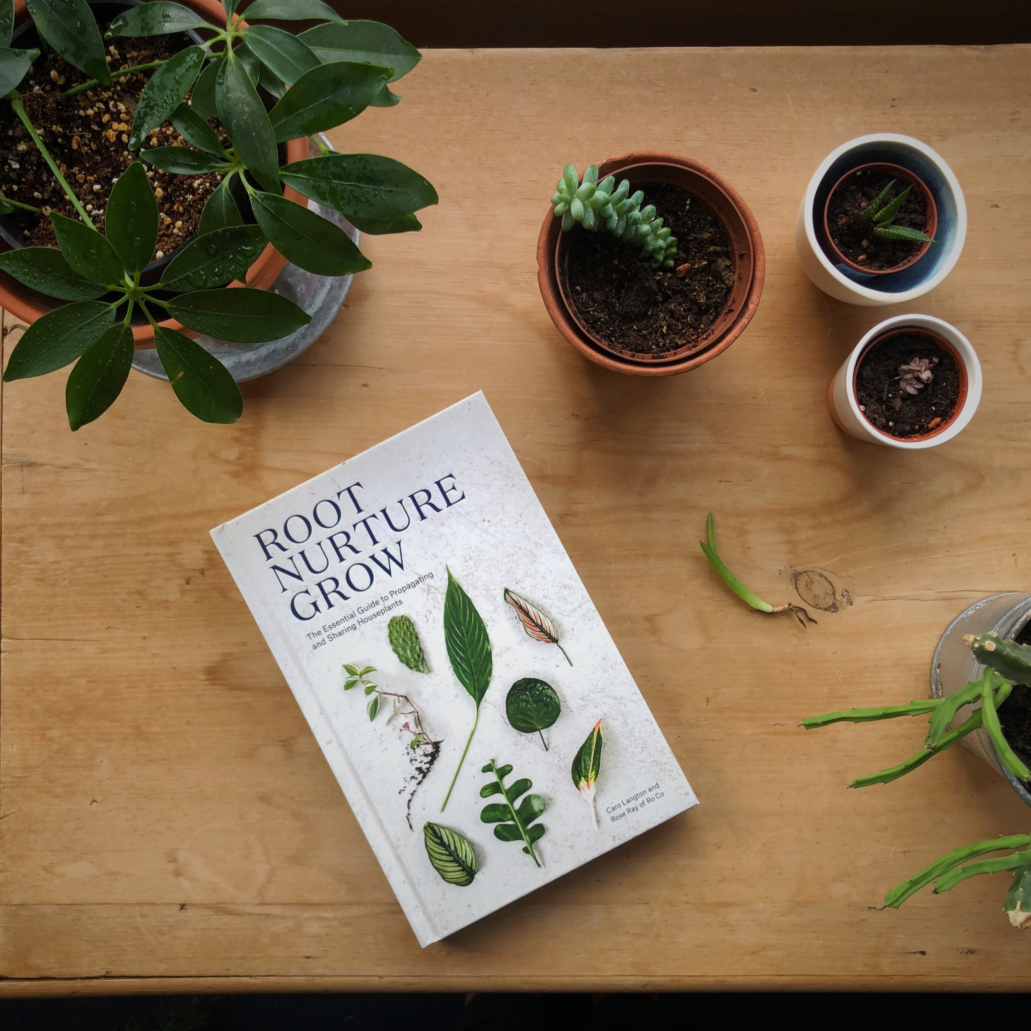 Image of a book called Root, Nurture, Grow on a table with some potting supplies and a potted plant next to it.