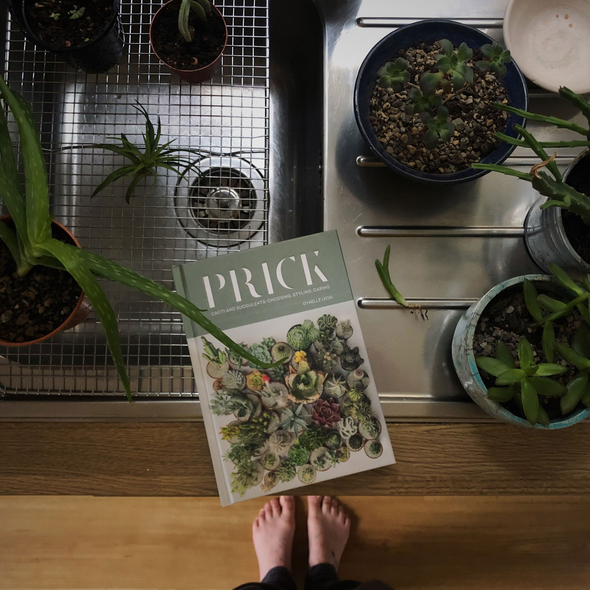 Image of a book balanced on the edge of a metal sink. Surrounded by plants. The book is called Prick.