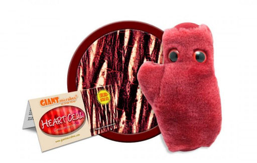 Heart Cell (Cardiomyocyte) - GIANTmicrobes® Plush Toy  - LabRatGifts - 1