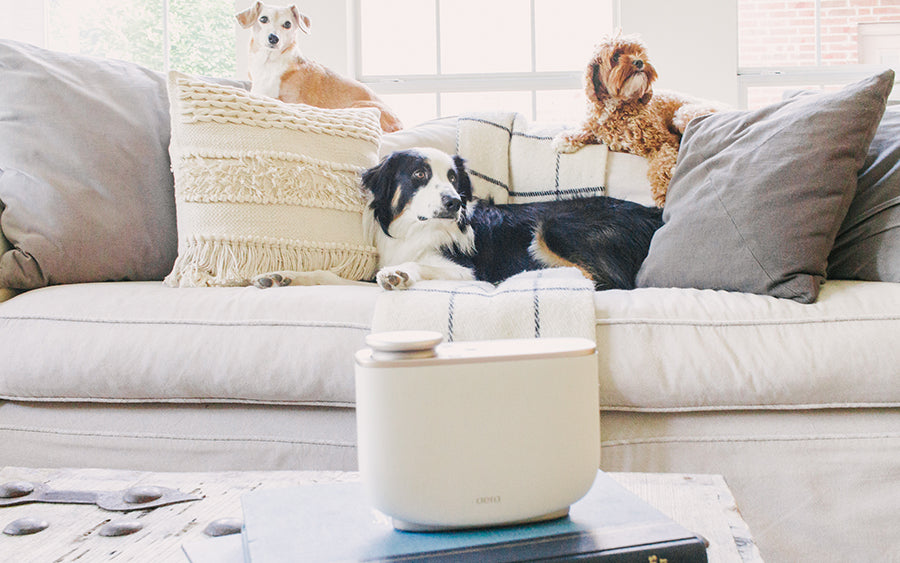 How to Prevent and Eliminate Pet Odors in Your Home