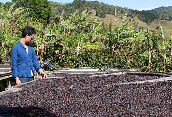 Fair Trade vs. Direct Trade Coffee