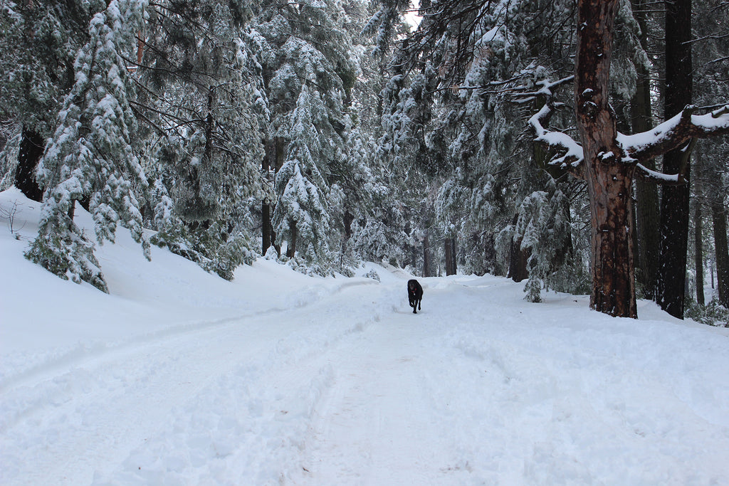 Best snow trips for dogs