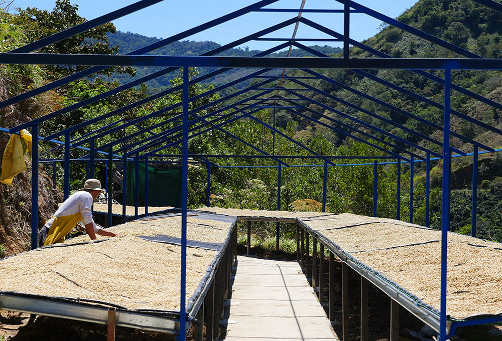Costa Rica Coffee Drying Beds - Seedpeoplesmarket.com