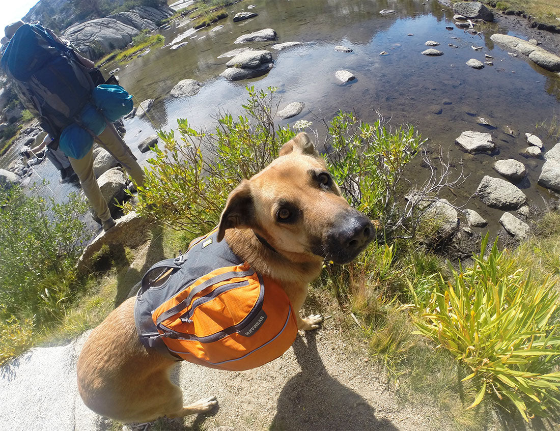 GoPro photo with dog