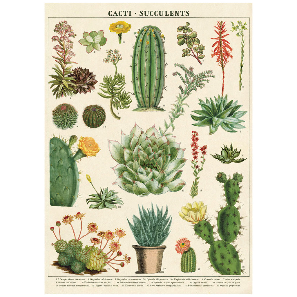 Cacti and Succulents Poster Wall Hanging