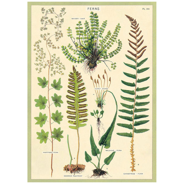 Fern Species Poster Wall Hanging